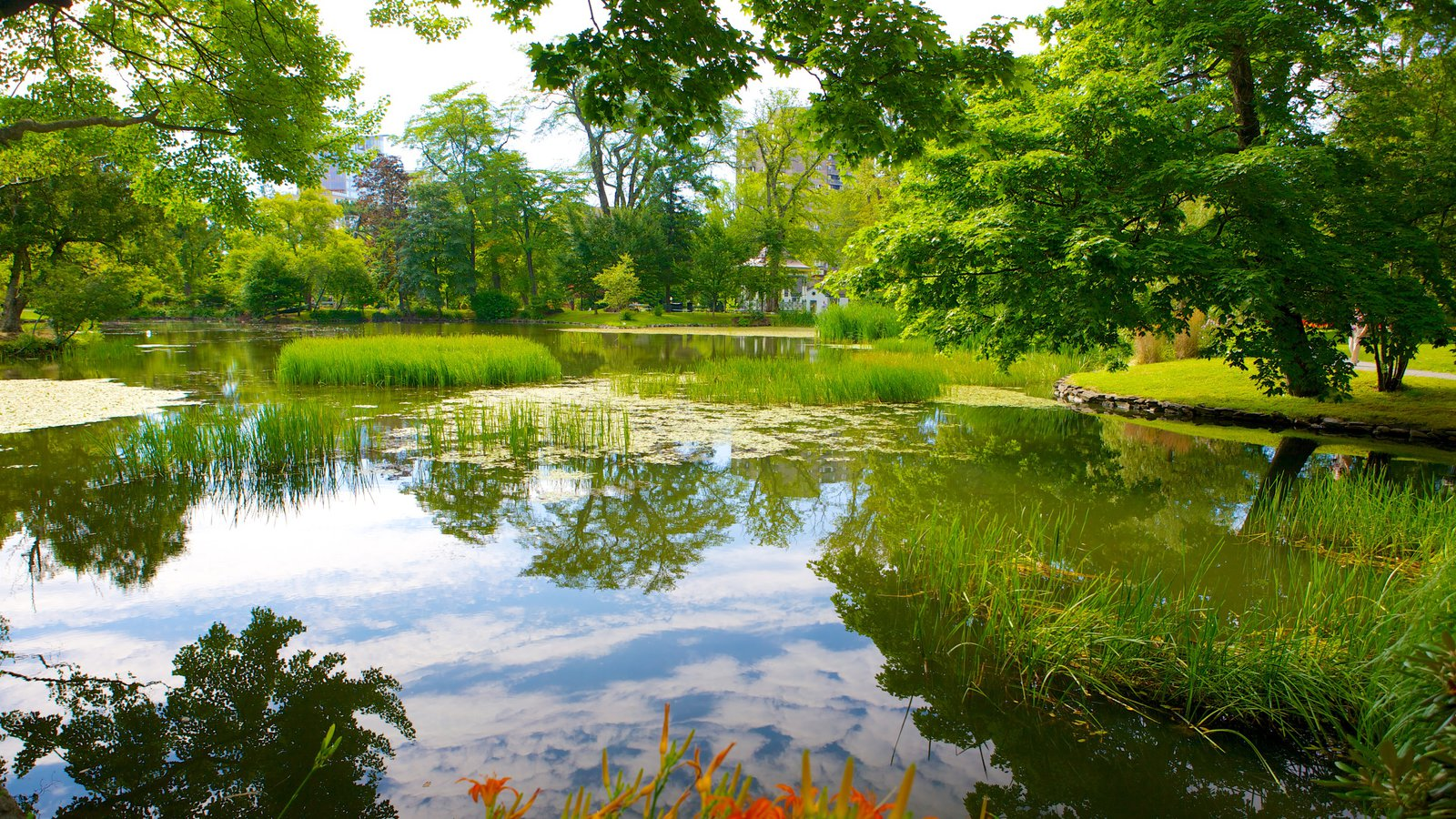 green lush halifax garden image and pond