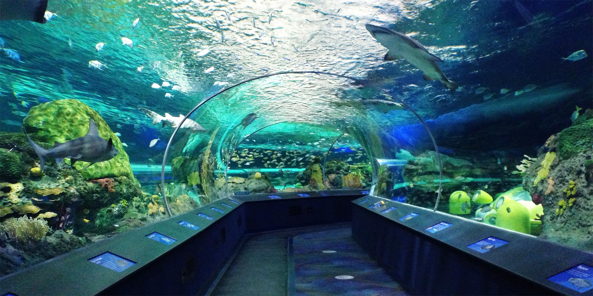 Ripleys aquarium tunnel with 360 views of sealife